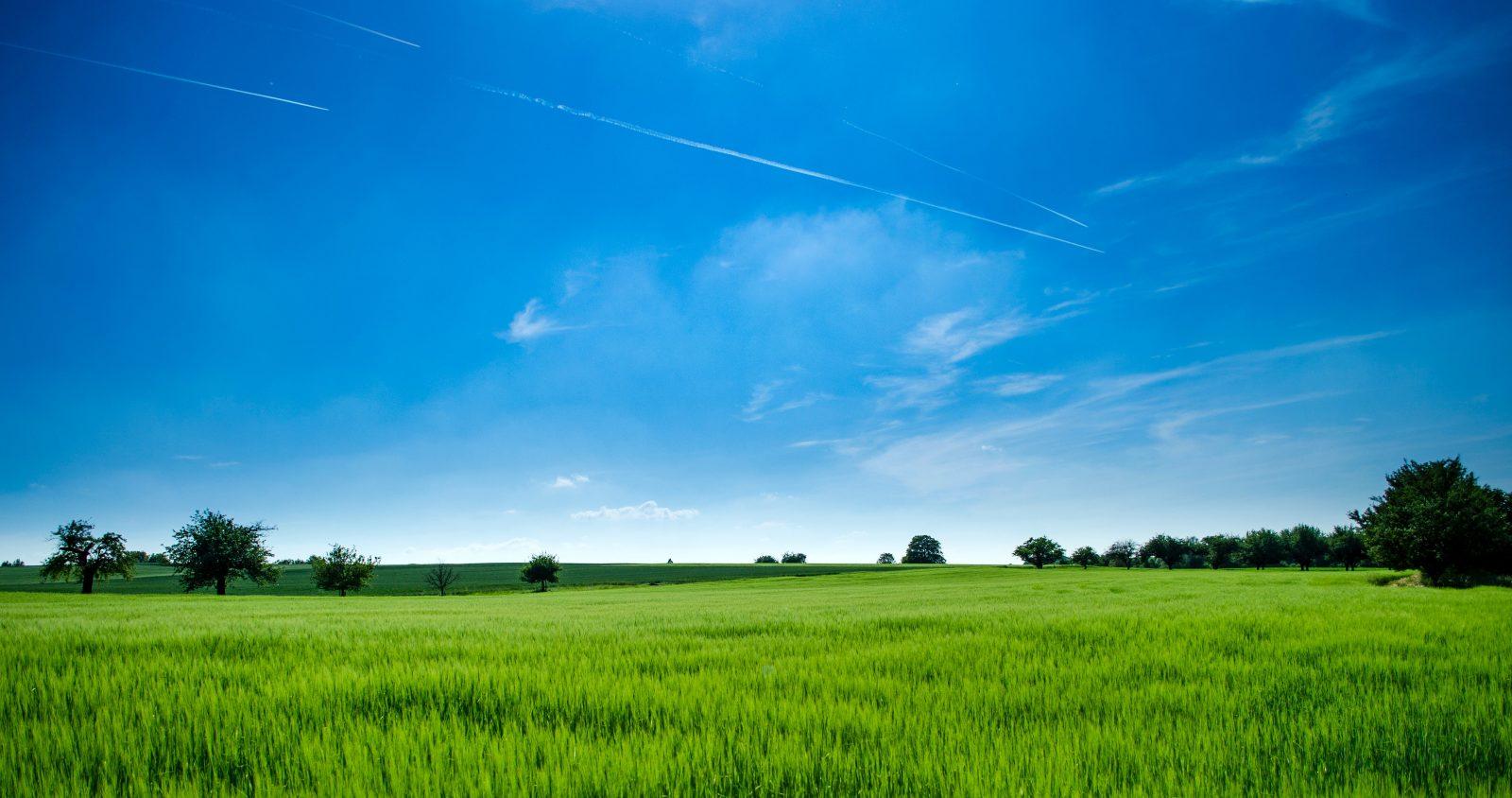field of grass lawn mower